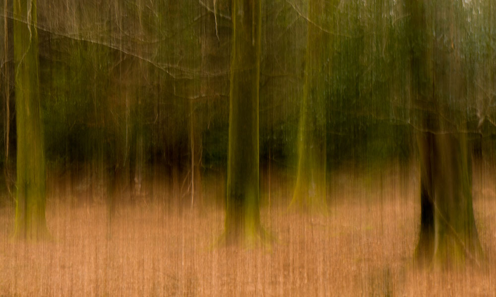 New Forest ICM1